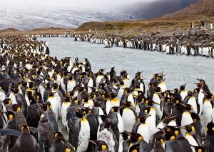 G_Antarctica_Bild_1.jpg