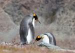 G_Antarctica_Bild_4.jpg