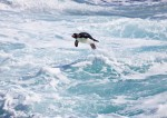G_Antarctica_Bild_5.jpg