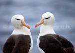 G_Antarctica_Bild_6.jpg