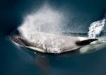 G_Antarctica_Bild_8.jpg