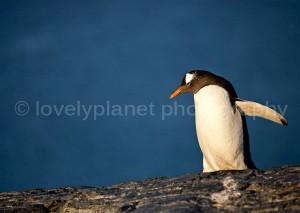 G_Antarctica_Bild_9.jpg